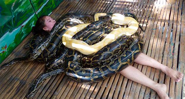 Massagem bizarra com cobras