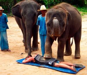 Massagem bizarra com elefantes